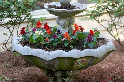 Salvia planter