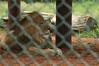 07-01-2010 York zoo