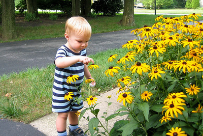 Ethan likes the pretty black eyed susans.