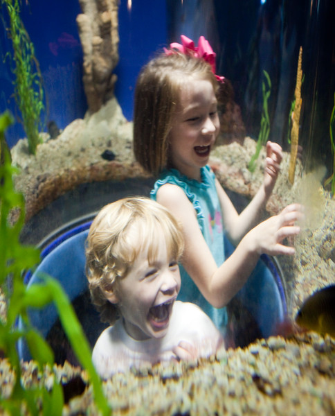 Underwater!<br /> <br /> Tennessee Aquarium