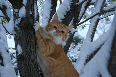 Snow-Cat in the tree!