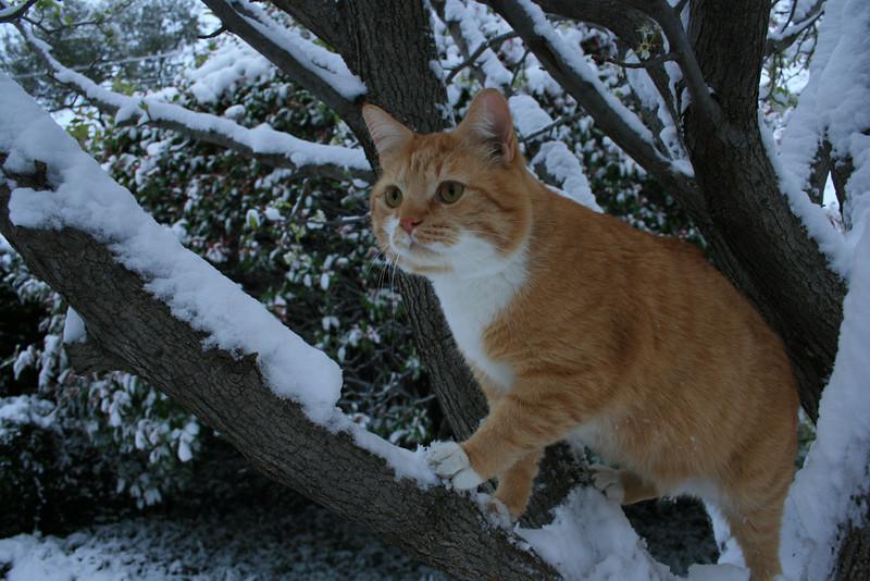 Snow-Cat in the tree!