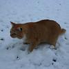 Snow-Cat!