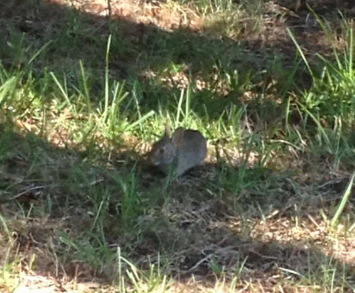 A small visitor to our backyard....July 4, 2013.
