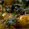 Même préparées 2 jours plus rôt, ces grenouilles restent excellentes