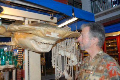 ...face to face with a hammerhead.