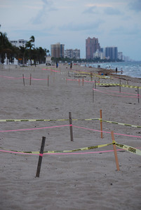 ...marked turtle nests. Is there room for sunbathers?
