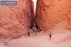 Bryce Canyon Park 0355
