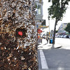 A shot of a pole on Haight St. where many a music poster has been stapled, over many years. Someone picked their way through the old rusty staples to find a home for their red gum. Only in the Haight district !!