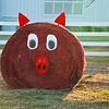 An Arkansas hay bale...