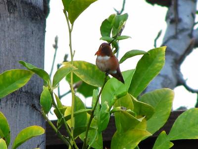 01/15/2011 Backyard
