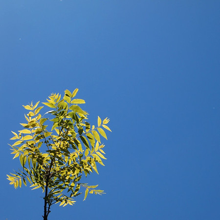 Blue, blue skies