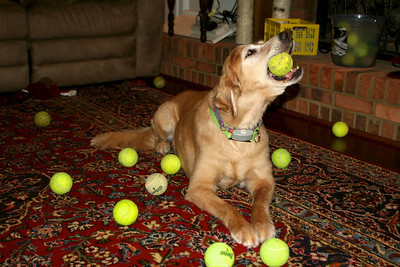 Tennis Ball Nirvana
