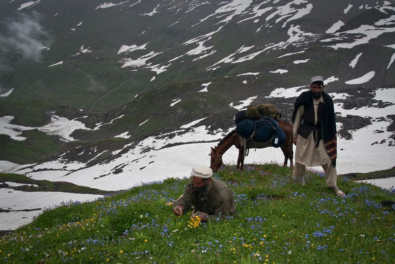 Ashraf collecting some flowers. The other guy is the random Gujar we hired to take our horse to the top of the pass. Actually on the last little stretch he and Ashraf unloaded the horse and carried our luggage up on their backs, because the path was too narrow and steep for a laden horse.