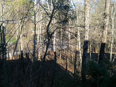 Another view of the backyard