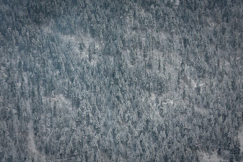 Snow-covered trees on a distant slope