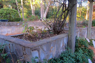 Before - wall with failing peonies