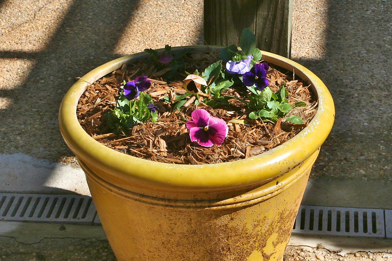 And empty planter gets a facelift.