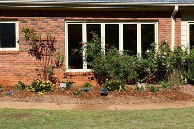 After - now there are seasonal and perennial plants to complement the roses in our side yard.