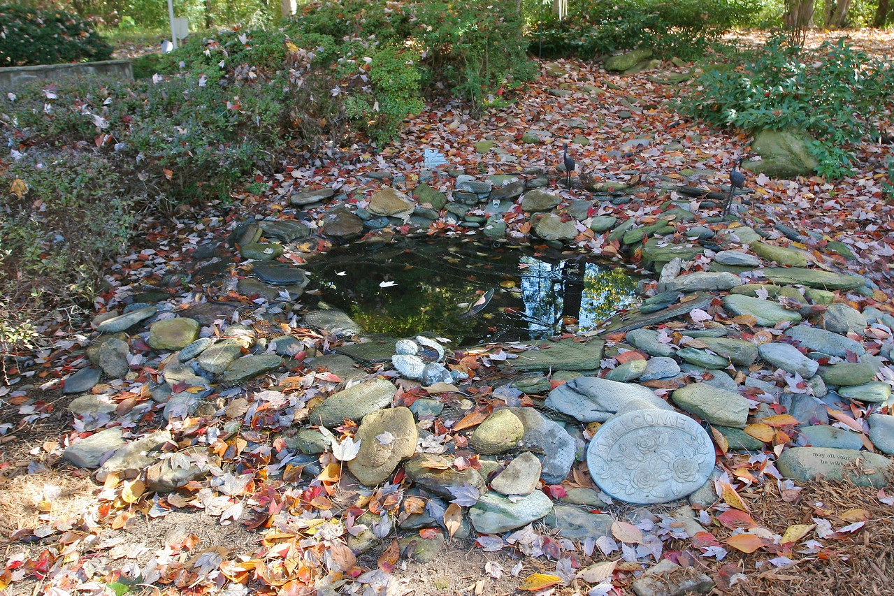 After - the pond is cleaned up and the area mulched.