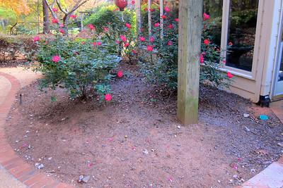 Before - rose garden