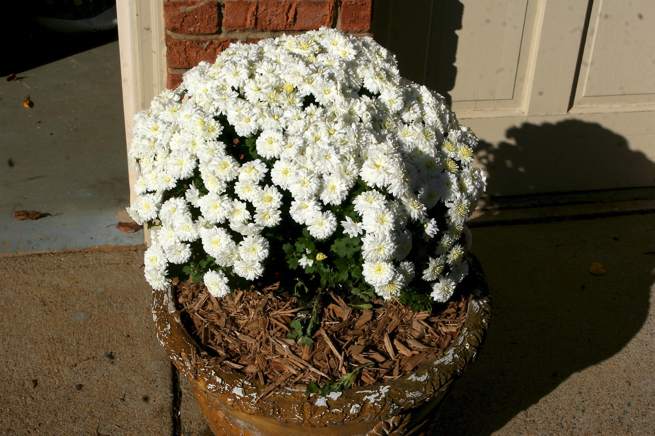 After - another empty planter has new life.