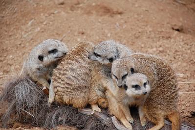 November 25, 2011 - Houston Zoo with Aunty Bernice