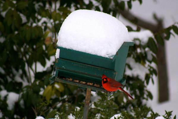Snow Birds 2011