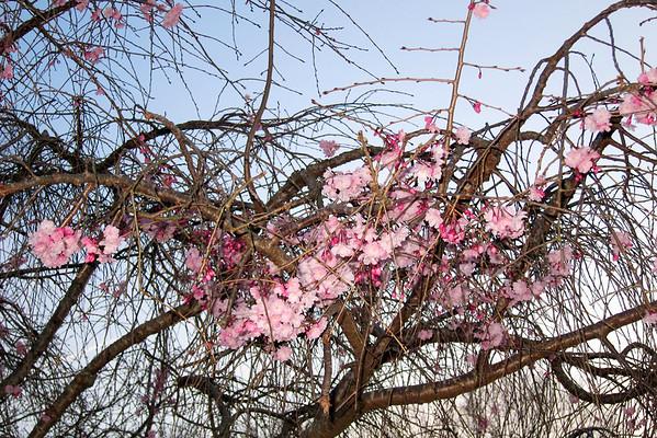 Spring Garden 2011