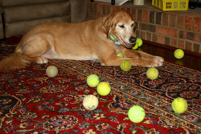 Surrounded by tennis balls