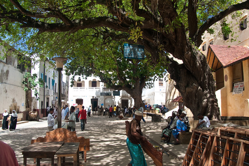 Big trees at the Lamu Fort, 2011. It looks like the last picture was taken by the far tree, looking towards what is the left in this picture.