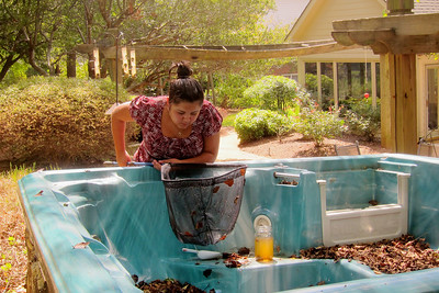 Liz rescues some tadpoles from the hot tub 001