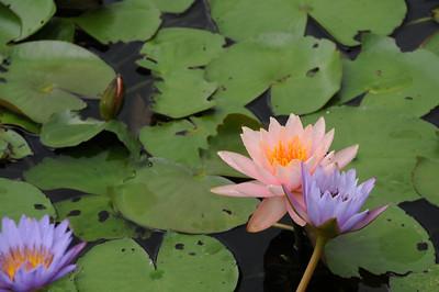 Wetland Park 2011/05