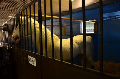 2012-01-21 Herrmanns' Royal Lipizzan Stallions