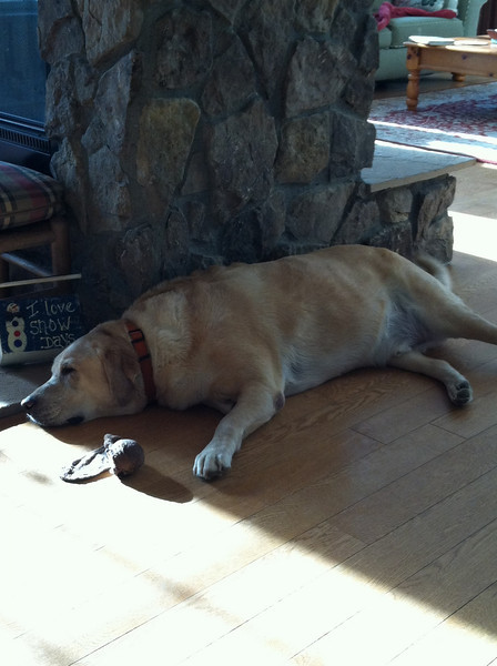 THIS IS BUDDY HE IS RESTING.