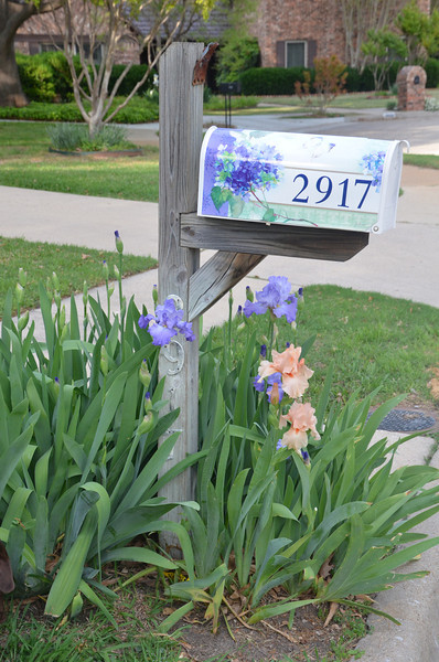 2012-03-26BlueBonnetFlowers (12)
