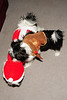 20121225_Christmas_015_out