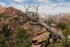 Zion Park Hike-2335