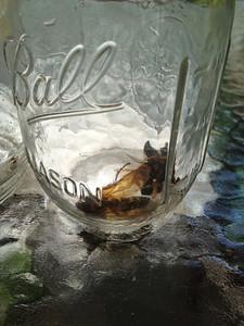 2012 Killer Bees