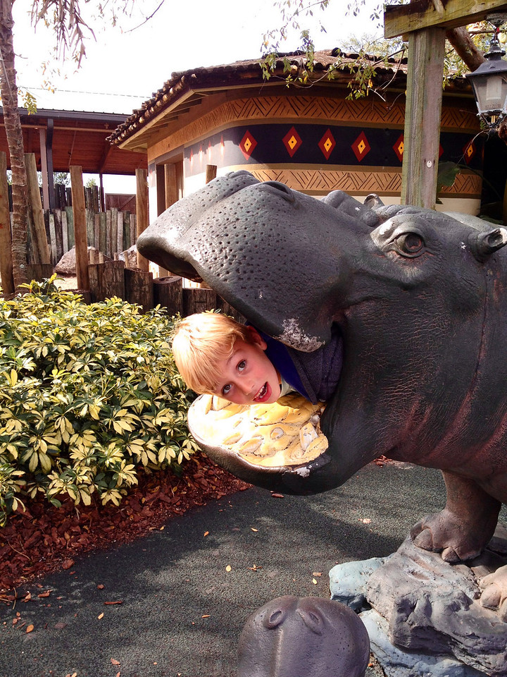 Koen eaten by hippo