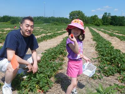 2012 Strawberry Picking