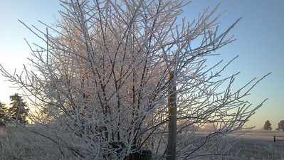 2012-12-17 Frost