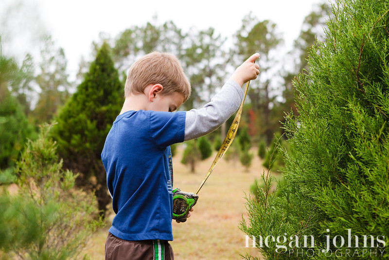 12-01-2012 We picked our Christmas tree at Roger's Tree Farm in Jacksonville!  They even did the cutting for us!  Evan's favorite part of the experience... the stumps.