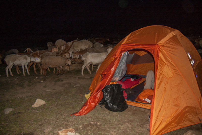 Apparently our chosen campsite was also the village salt lick. We had lots of four-legged visitors.