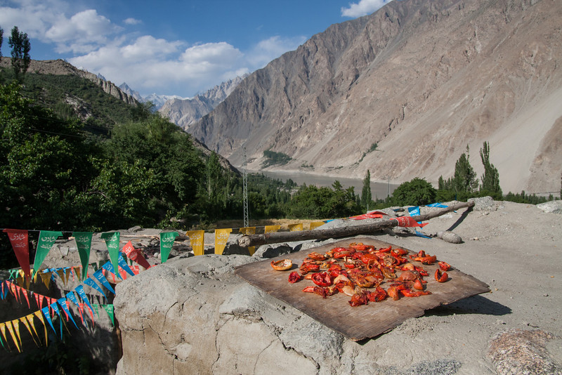 Tomatos drying in the sun