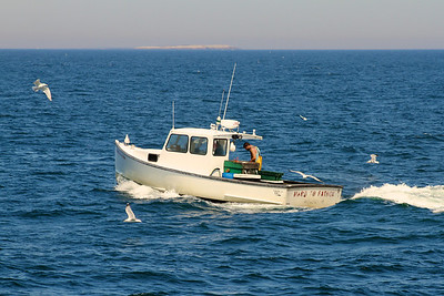 We saw this lobsterman returning with his catch. You know he was successful, because he's attracted a flock of seagulls. I like the name of his boat: Hard to Fathom.