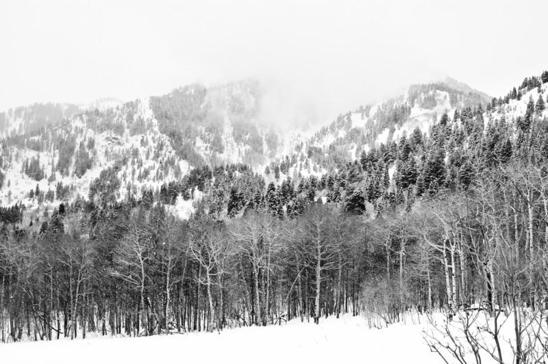 Mountain Solitude - Utah