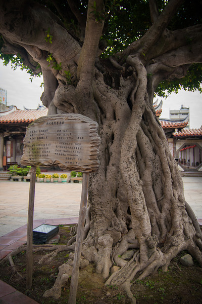 "I'm not sure what the sign says in Chinese, but I think it's something like ""awesome-looking tree"""