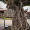 """I'm not sure what the sign says in Chinese, but I think it's something like """"awesome-looking tree"""""""