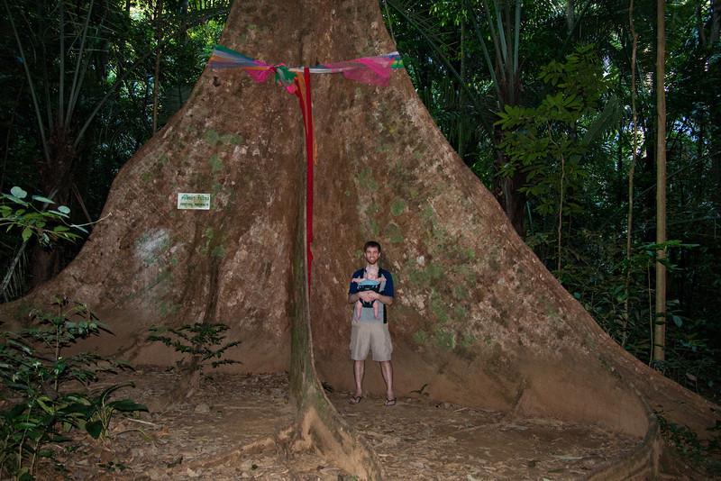 That's a big tree!
